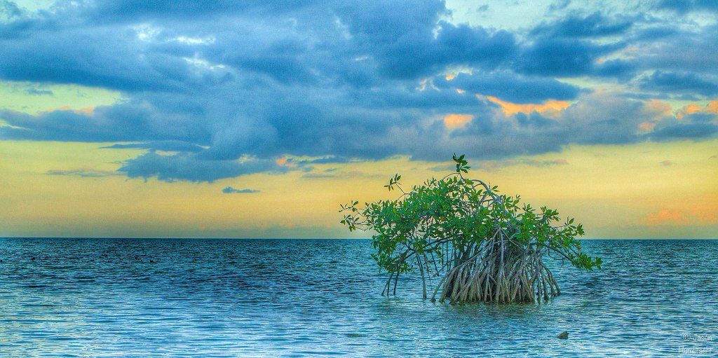Sunset | Mangrove | Chetumal Mexico | Image By Indiana Architectural Photographer Jason Humbracht