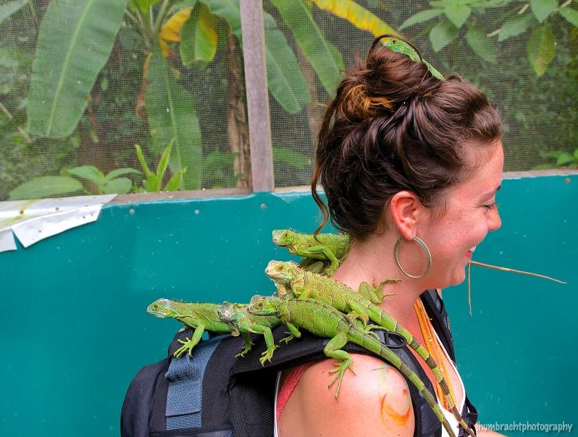 San Ignacio Hotel | Green Iguana Conservation Project | Female Baby Green Iguana | image captured by Jason Humbracht