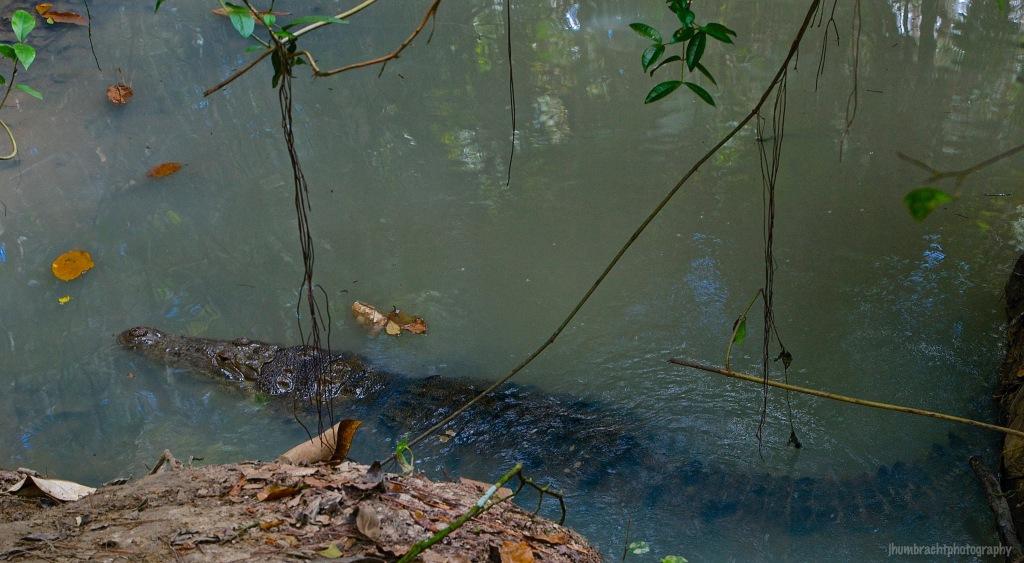 American Crocodile | Belize Zoo, Belize | Image By Indiana Architectural Photographer Jason Humbracht
