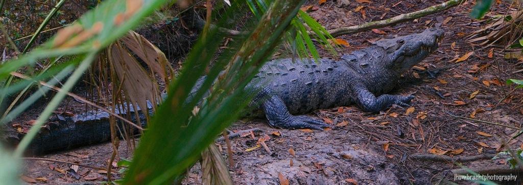 Morale's Crocodile | Belize Zoo, Belize | Image By Indiana Architectural Photographer Jason Humbracht
