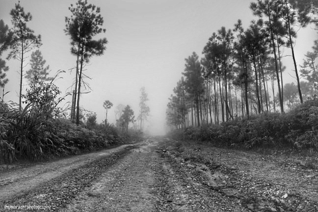 Mountain Pine Ridge Road in Belize photo taken by Indiana Commercial Photographer Jason Humbracht in 2015