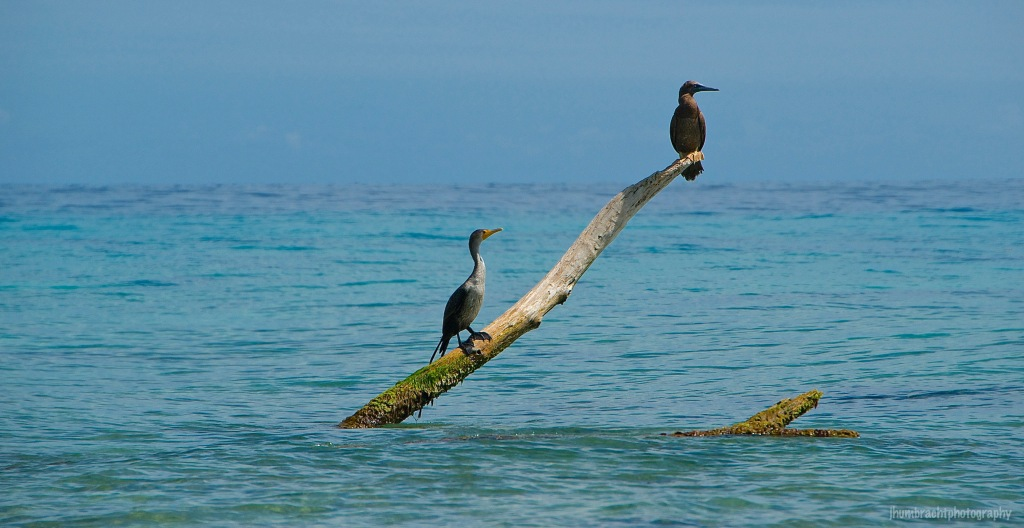 Seabirds | Laughingbird Caye | Placencia, Belize | Image By Indiana Architectural Travel Photographer Jason Humbracht