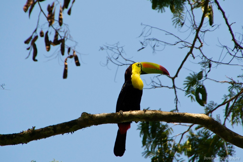 Keel-billed Toucan | Birds of Belize | Image By Indiana Architectural Travel Photographer Jason Humbracht