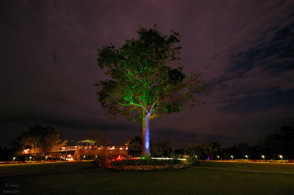 Ceiba Tree | La Casa de Don David | El Remate Guatemala | Image By Indianapolis-based Architectural Photographer Jason Humbracht in 2015