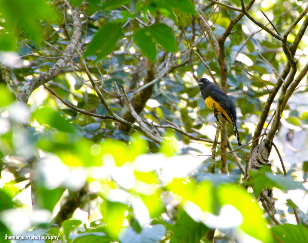 Birds of Central America (Part 3) | Nature Photography