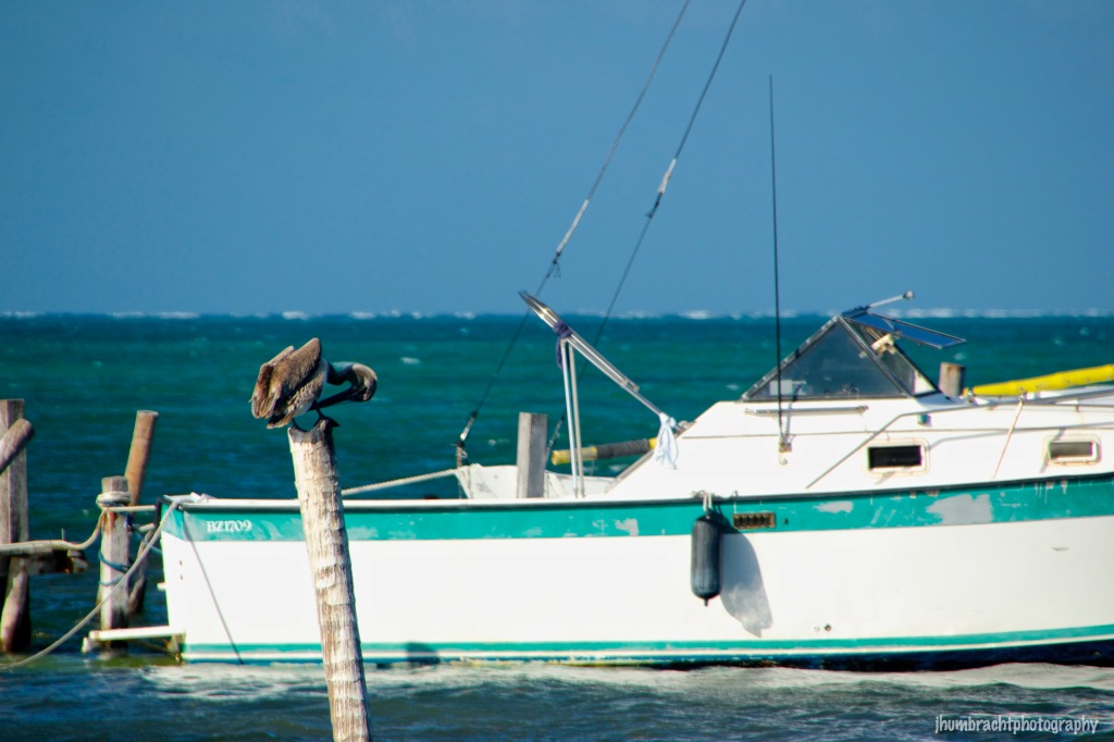 Pelican | Caye Caulker Belize | Image By Indianapolis-based Architectural Photographer Jason Humbracht in 2015
