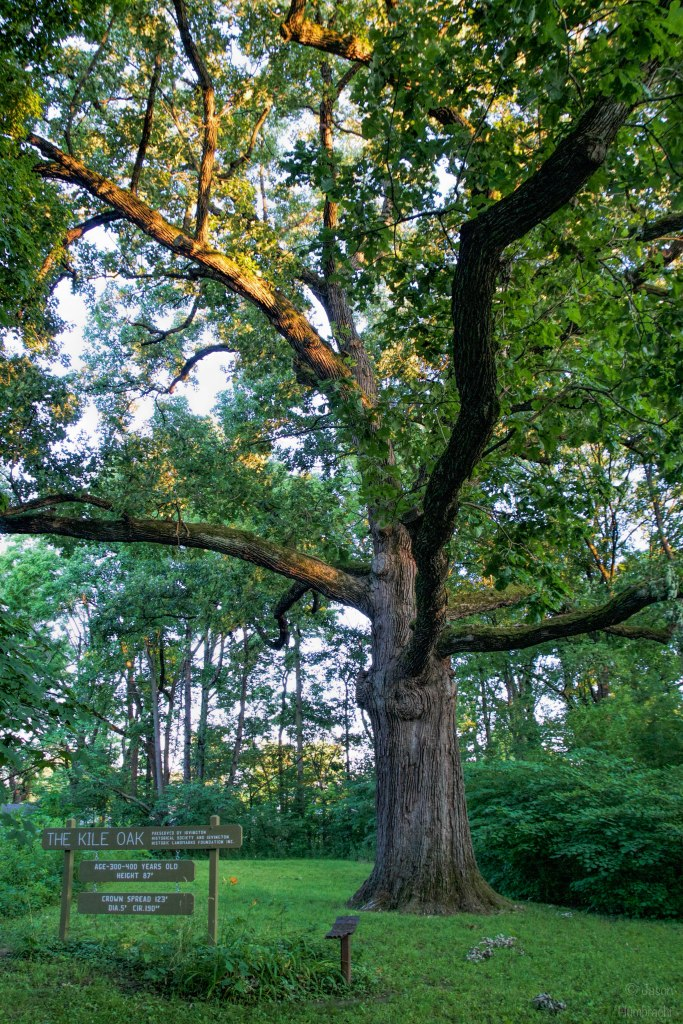 The Kile Oak Tree | Irvington, Indiana | Oldest Tree in Indiana | Burr Oak Tree | Image By Indiana Architectural Photographer Jason Humbracht